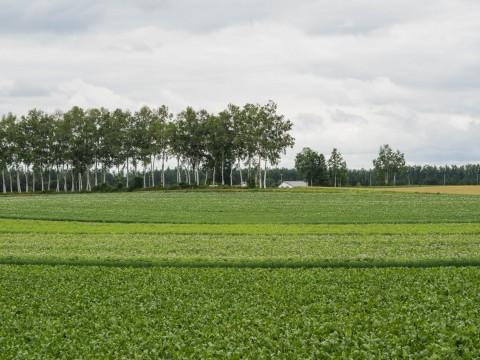 帯広空港へ向かう途中・・中札内村の夏らしい農村風景