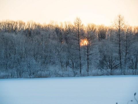 今年は見る事が出来た!霧氷の木々の背後から初日の出。