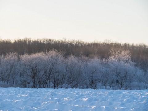 寒さも本番!この時期は霧氷のできる日が多いです。