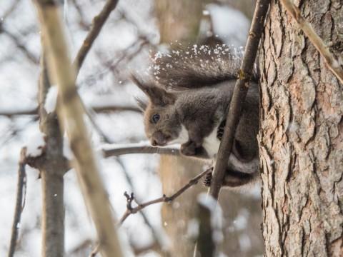 野鳥の群れに・・エゾリス君、カラマツの木の枝で固まる!
