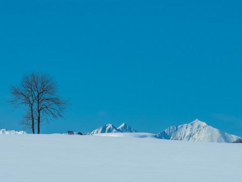 日差しが強くなる2月・・真っ白な雪原と日高山脈