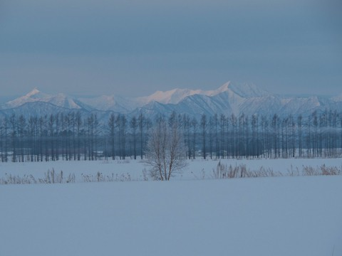 いつもと違う方向で・・日高山脈と防風林と霧氷