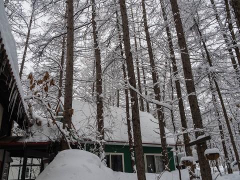 昨夜から今朝にかけ雪、昼から晴れ・・そして、ついに屋根から落雪!