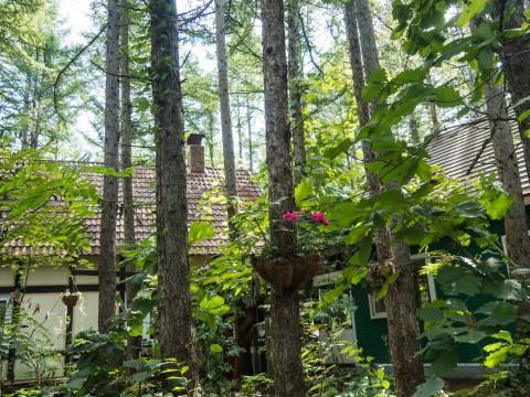 台風一過の秋晴れ・・森の雰囲気も少し秋めいて来ました。