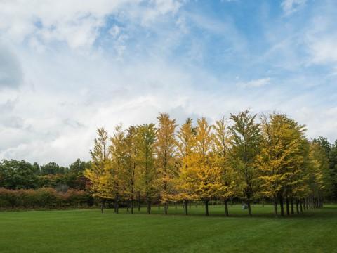 今季一番の冷え込み・・「美術村庭園」の紅葉が見事です。