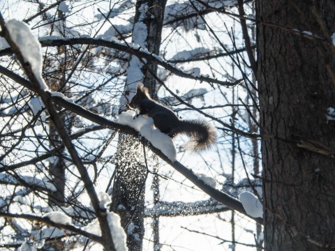 冬の楽しみは・・「エゾリス君の観察」と「さらべつ霧氷ツアー」