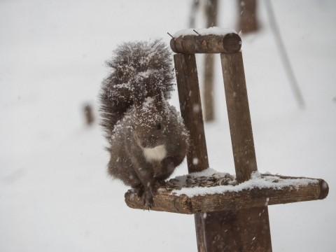 雪まみれのエゾリス君の後・・真っ赤なオオマシコさんがやって来ました。