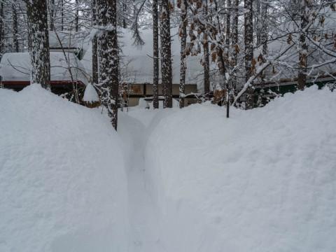大雪です!中札内に来て11年、過去最高の積雪量になりました。