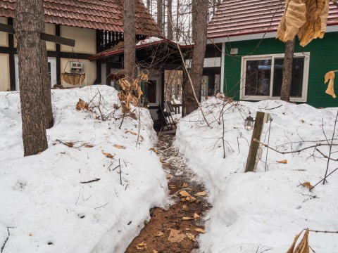 雪どけ進むカンタベリー・・今日から4/12まで休館いたします。