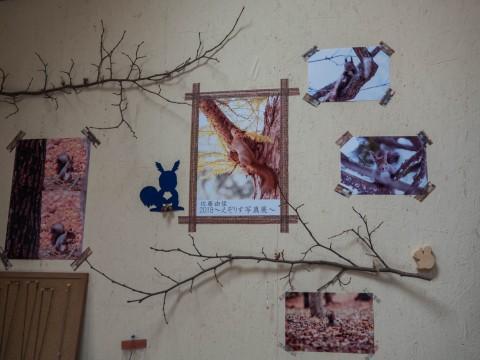佐藤由佳さんの「2018えぞりす写真展」はじまりました。