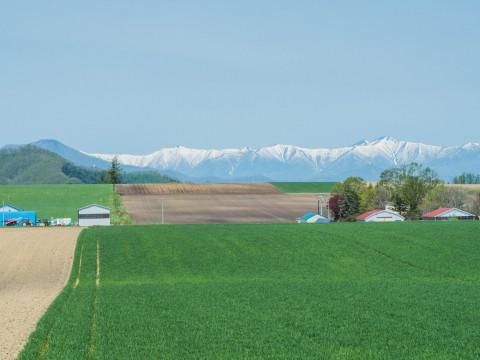 新緑の季節は・・残雪の日高山脈と畑のコントラストがきれい。