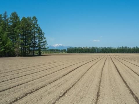 衣替え中のエゾリス君と真っ平な畑の先の十勝幌尻岳。