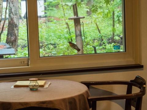 キビタキさんがカフェを覗いてる?・・新緑の季節です。