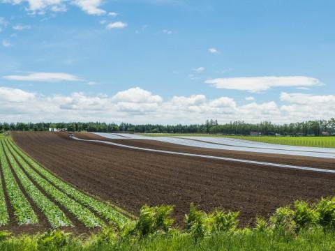 久しぶりの青空・・さわやかな天候で畑作業もはかどりますね!