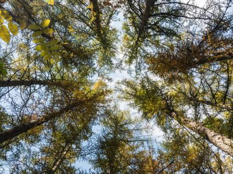 秋深まり・・忙しそうなエゾリス君!カラマツの紅葉も進みます。