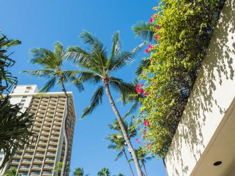 2018常夏の楽園ハワイ(ホノルル・オアフ島)へvol.1~実は初めての〇〇〇~