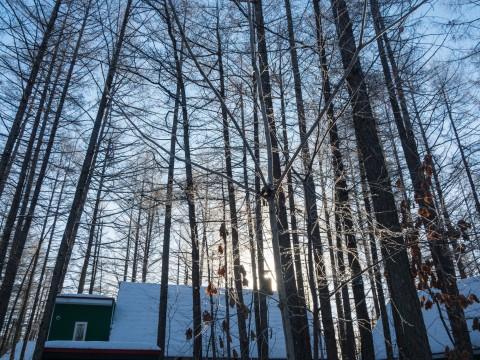 今季最低マイナス21℃カンタベリー周辺の木々も霧氷に・・