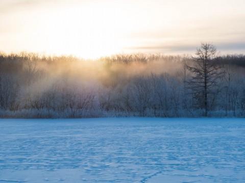 霧氷のピーク?マイナス25℃の更別霧氷スポットにて。