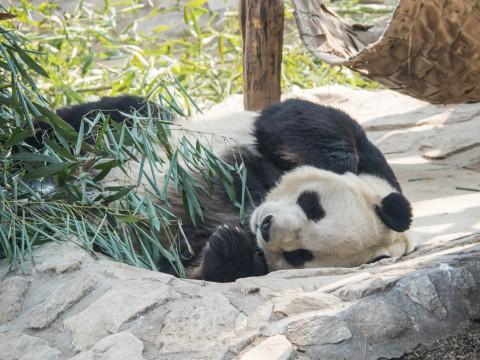 2019北京・万里の長城vol.3~北京動物園パンダと南鑼鼓巷~