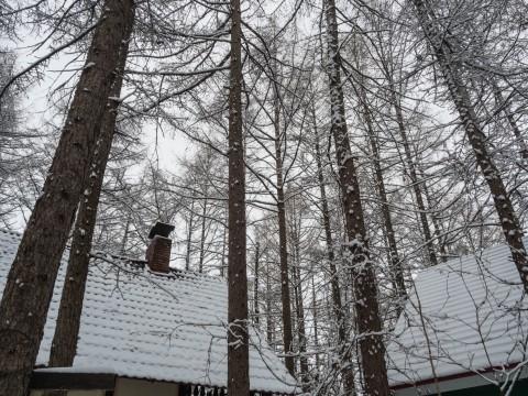 G.W.初日は雪・・これが本当に平成最後の雪リス!