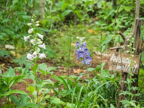 ひさびさの雨に濡れるカンタベリー・ガーデンの草花。