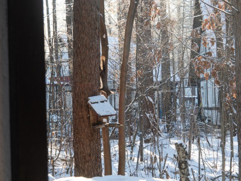 マイナス17℃、霧氷の木々をエゾリス君が駆け回ります。