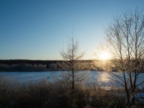 """今年も""""霧氷""""のシーズン・・雪は少ないけど凍れます!"""