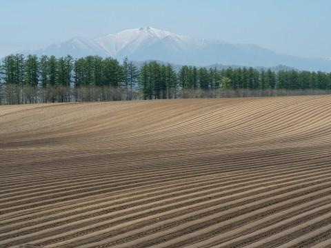 5月下旬は新緑の季節・・畑の畝模様が風景のアクセントに!