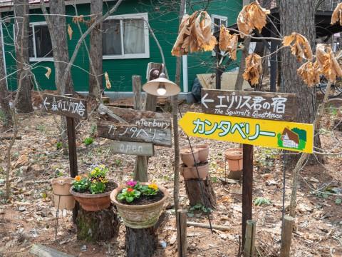 看板類を修理、花を植え、カタクリも咲き・・春らしく!
