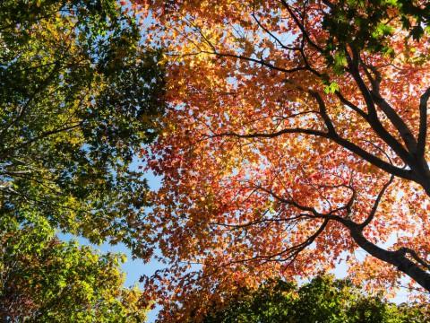 風情があります!「中札内美術村」の紅葉が見頃になってきました!