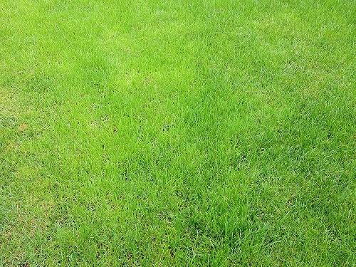 芝刈りしていますでしょうか…