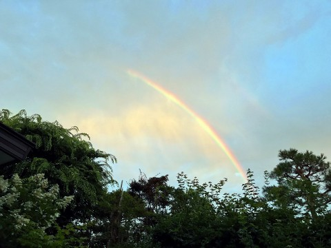 昨日は虹がかかってました
