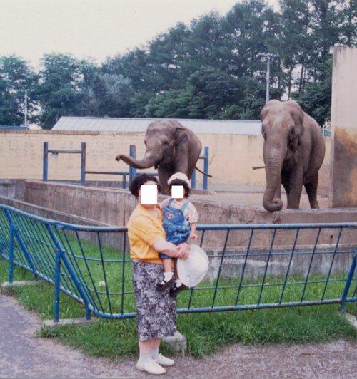 おびひろ動物園 アジア象 ノンとナナ  (平成6年頃の撮影)