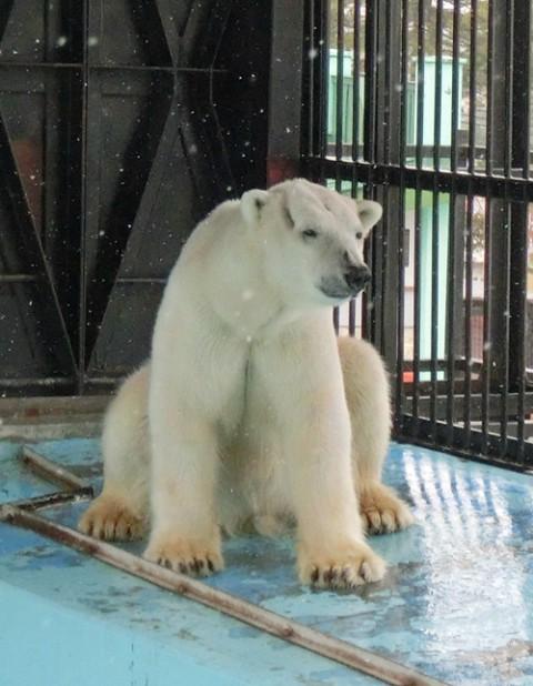3月22日~おびひろ動物園・イコロ&アイラ  11時~14時