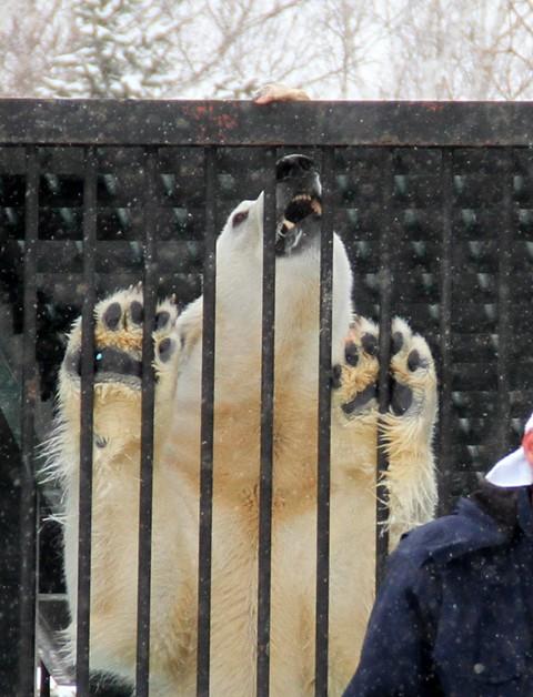 おびひろ動物園 イコロの思い出画像 2012.3.25