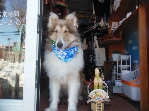 2016年の看板犬ビス初仕事