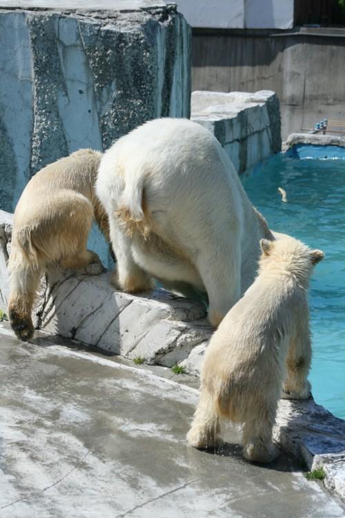 えっ! イコロとキロル 帯広動物園へ!