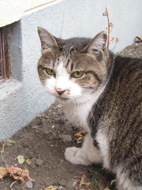 このネコ ご存知有りませんか?