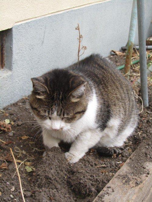 このネコ ご存知有りませんか? Ⅱ 続編