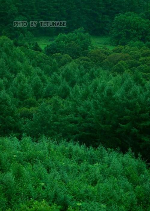 緑が深~い