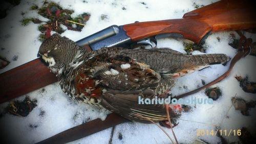 エゾ雷鳥の捕獲