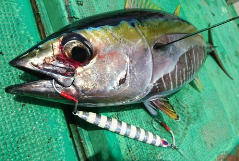 マグロ釣り沖縄県久米島