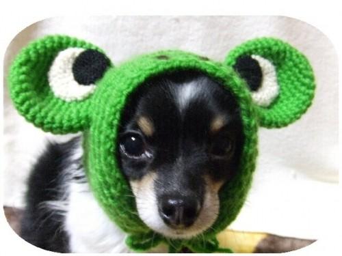かえるさんの帽子(U^エ^U)