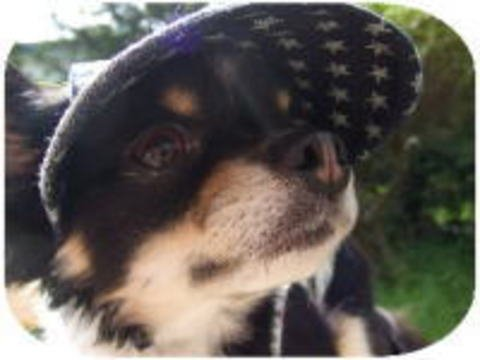 犬*脱げにくい帽子