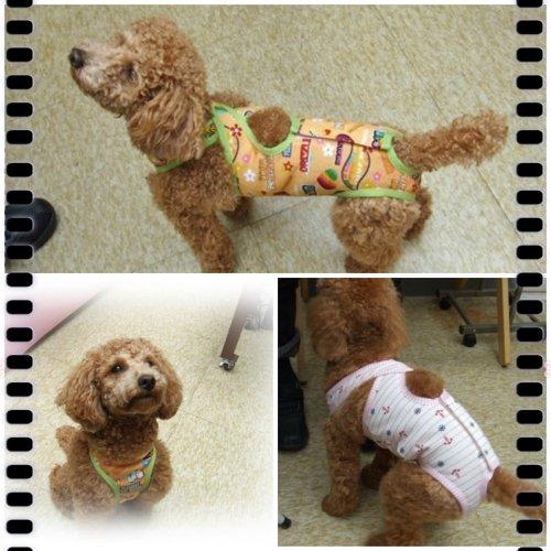 犬服*レオタードタイプのマナーパンツ