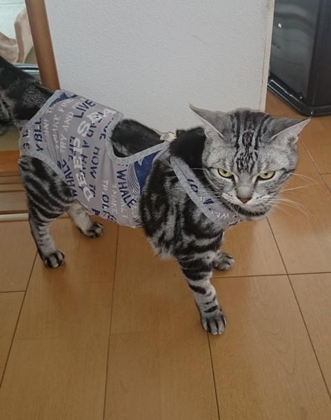 ネコちゃん 術後服