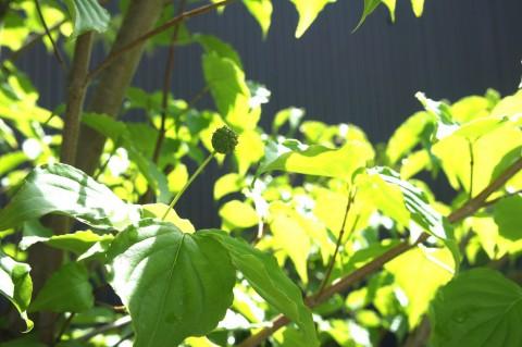 モデルハウスの草花たちが咲きました\(^o^)/