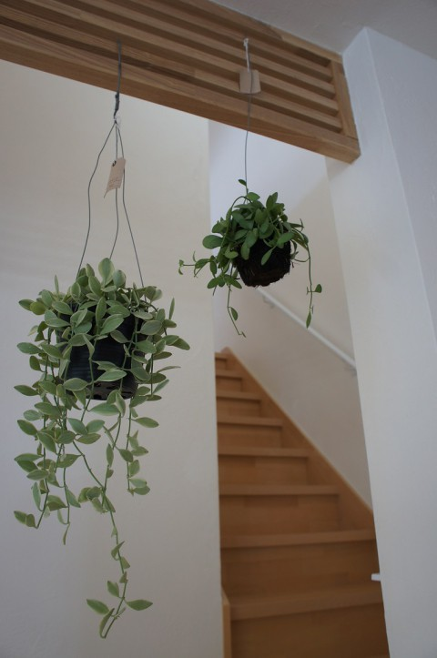 緑の効果!!! 植物たちが家を華やかに(^^)