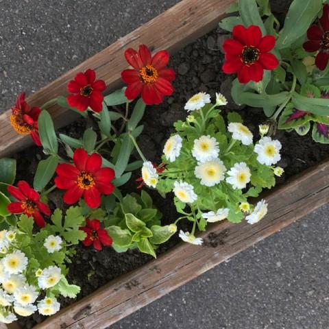 『お花を植える会』今年も始動!!お花も一緒に皆さまをお出迎えします✧*