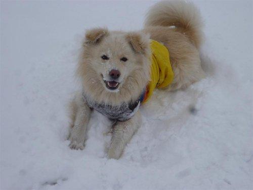 雪だよ~(^o^)丿!